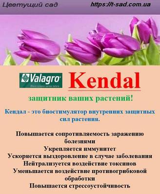 Kendal (Кендал) - биостимулятор внутренних защитных сил растения.