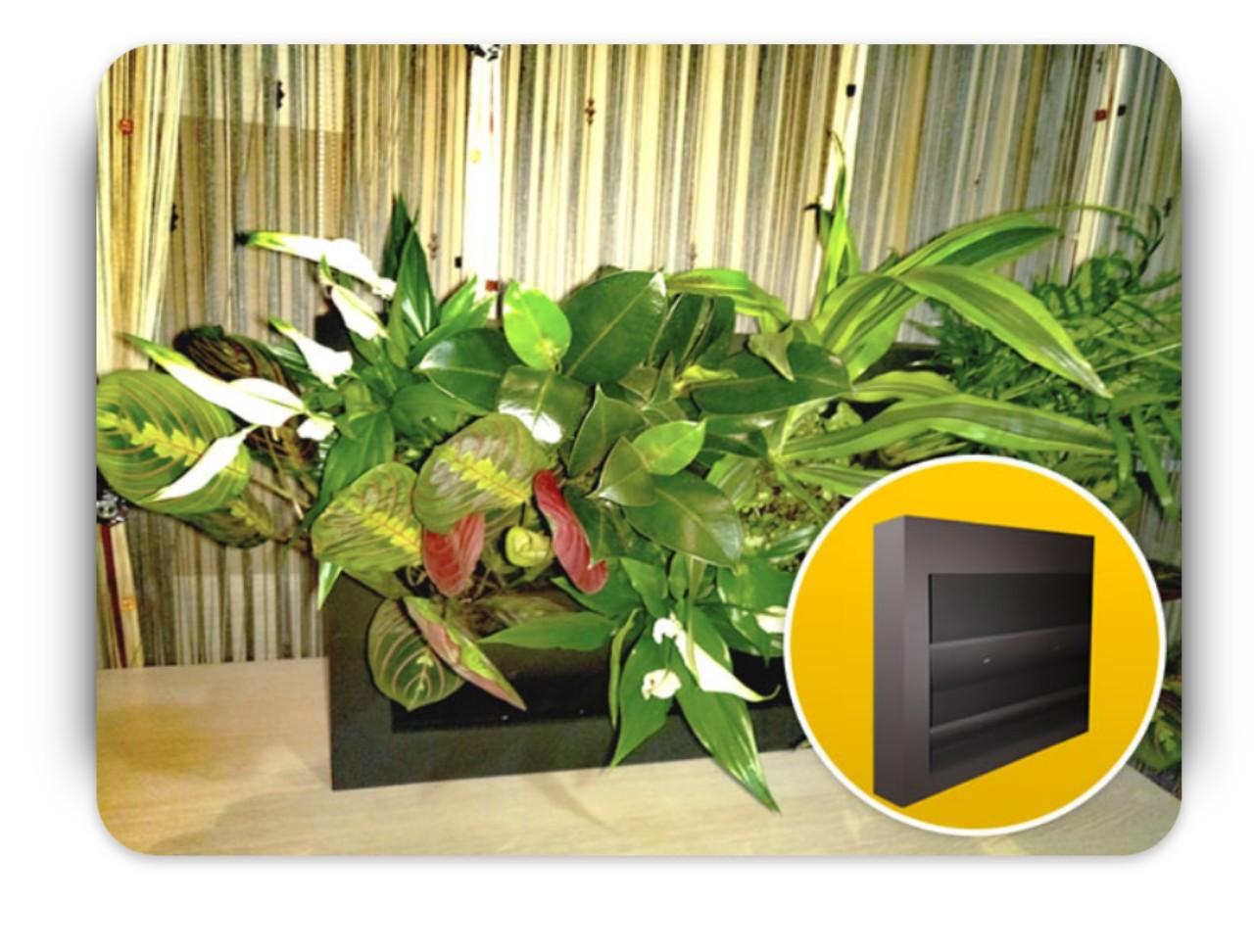 Фитокартина, Картина из живых растений, 40х40 см