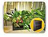 Фитокартина, Картина из живых растений, 40х40 см, фото 2