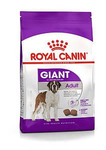 Сухий корм Royal Canin Giant Adult для дорослих собак великих порід, 4КГ