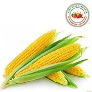 Семена кукурузы Кращий Урожай