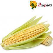 Семена кукурузы Яскрава