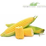 Профессиональные семена кукурузы (Голландия)