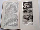 Физиология кровообращения во внутриутробном периоде И.А.Аршавский, фото 6