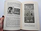 Физиология кровообращения во внутриутробном периоде И.А.Аршавский, фото 7
