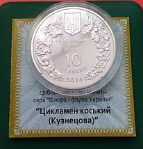 Цикламен коський (Кузнецова) Срібна монета 10 гривень унція срібла 31,1 грам, фото 3