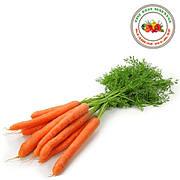 Семена моркови фирмы Кращий Урожай