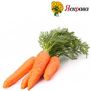 Насіння моркви Яскрава