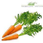 Профессиональные семена моркови (Голландия)
