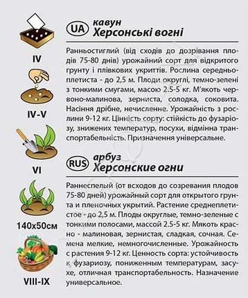 """Семена арбуза раннего """"Херсонские огни"""" (2 г) от Agromaksi seeds, фото 2"""