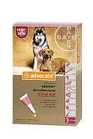 Краплі Advocate Bayer Адвокат інсектицидні для собак вагою 10 - 25 кг, 1х2,5мл