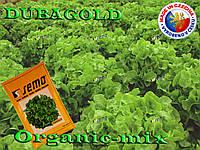 Салат дубовый зеленый Дубаголд / Dubagold, TM Semo (Чехия) Проф. фасовка 1 грамм