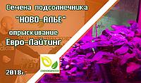 Опрыскивание подсолнечника Ново-алье, гербицидом Евро-Лайтинг, на разных этапах развития.
