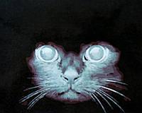 Картины по номерам 40×50 см. Взгляд кошки