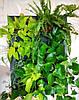 Фитокартина, Картина из живых растений, 50х70 см, фото 2