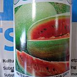 Чарльстон Грей 10 шт семена арбуза GSN Франция, фото 3