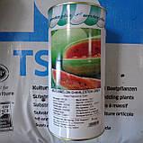 Чарльстон Грей 10 шт семена арбуза GSN Франция, фото 4