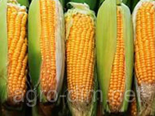 Семена кукурузы НС-3014 , фото 2