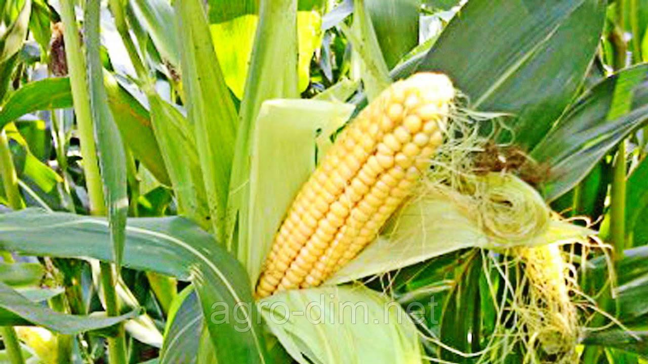 Семена кукурузы НС-101