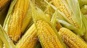 Семена кукурузы НС-300