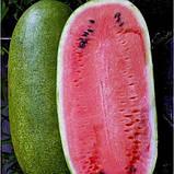 Чарльстон Грей 10 шт семена арбуза GSN Франция, фото 5