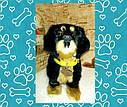 🐶 Интерактивная собака собачка щенок песик живая игрушка на поводке видео: ПОДАРКИ НА ДЕНЬ РОЖДЕНИЯ, фото 2