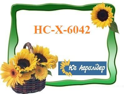 Насіння соняшника НС-Х-6042, A-Е, Південь Агролидер