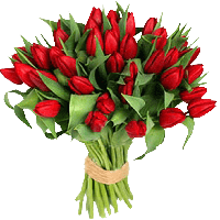 Тюльпаны сорта Строн Голд, фото 1