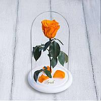 Стабилизированная роза в колбе Lerosh - Mini 27 см, Оранжевая на белой подставке - 138910