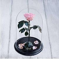 Стабилизированная роза в колбе Lerosh - Premium 33 см, Бледно Розовая - 138929