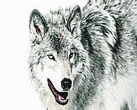 Картина по номерам Серый волк, 40x50 см., Домашнее искусство