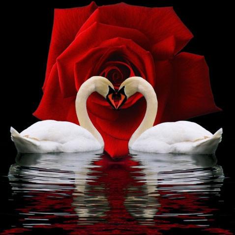 "Алмазная вышивка ""Пара влюбленных лебедей"""