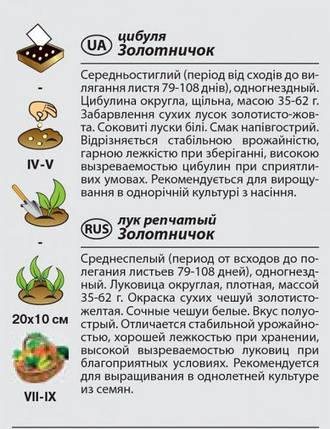 """Семена лука репчатого """"Золотничок"""" (1 г) от Agromaksi seeds, фото 2"""