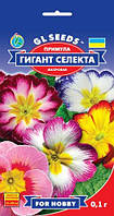 Примула Гигант Селекта с цветками разнообразной окраски диаметром 2,5-3 см многолетняя, упаковка 0,1 г