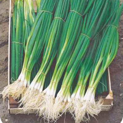 """Семена лука на зелень """"Парадэ"""" (100 семян) от Bejo, фото 2"""