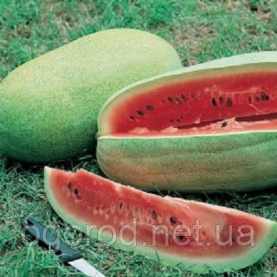 Чарльстон Грей 10 шт семена арбуза GSN Франция