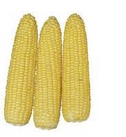 Семена кукурузы Хаммер F1, Lark Seeds 2 500 семян