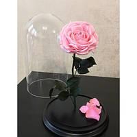 Роза под колбой Розовая