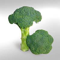 Насіння капусти броколі KS 355 F1 / КС 355 Ф1 (1000шт) Kitano Seeds