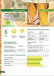 Семена кукурузы Гран 310 ФАО 250, фото 2