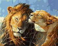 Картина по номерам Влюбленные львы 40 х 50 см (VP991)