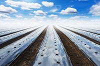 Пленка для мульчирования почвы с отверстиями, полотно, 1 сезон. рулон  500м. шир. 1200мм, толщ 25мкм