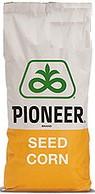 Семена кукурузы P9606