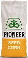 Купить Семена кукурузы P9606