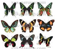Фетр с рисунком - Бабочки FP-BF-4 Формат А4 - 19см x 28см