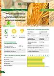 Семена кукурузы ВН 6763 ФАО 320, фото 2