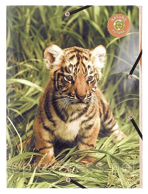 Папка на резинках картонная  Wildlife EXACOMPTA  А4