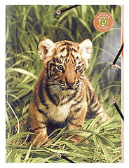 Папка на резинках картонная  Wildlife EXACOMPTA 58046E