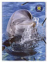 Папка на резинках картонная  Wildlife EXACOMPTA  А4 , фото 2