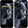 """Чехол на iPhone 8 Красивый кот """"3038c-1031-19383"""""""